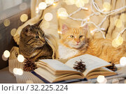 Купить «two cats lying on sofa with book at home», фото № 32225224, снято 15 ноября 2017 г. (c) Syda Productions / Фотобанк Лори