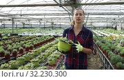 Купить «Portrait of successful smiling woman farmer working in greenhouse, engaged in cultivation of potted portulaca», видеоролик № 32230300, снято 3 июня 2019 г. (c) Яков Филимонов / Фотобанк Лори