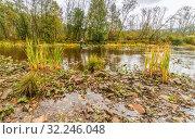 Купить «Fishing of grayling on the mountain river Avzyan. Bashkortostan», фото № 32246048, снято 6 сентября 2016 г. (c) Акиньшин Владимир / Фотобанк Лори