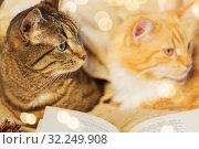 Купить «two cats lying on sofa with book at home», фото № 32249908, снято 15 ноября 2017 г. (c) Syda Productions / Фотобанк Лори