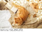 Купить «red tabby cat lying on blanket at home in winter», фото № 32250272, снято 15 ноября 2017 г. (c) Syda Productions / Фотобанк Лори