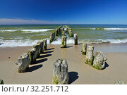 Old wooden breakwater on sandy shore of Baltic sea. Стоковое фото, фотограф Сергей Трофименко / Фотобанк Лори