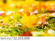 Желтые листья на траве. Стоковое фото, фотограф Кристина Викулова / Фотобанк Лори