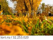 Купить «Кленовые листья на газоне», фото № 32253020, снято 3 октября 2019 г. (c) Кристина Викулова / Фотобанк Лори