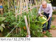 Купить «Man watering plants in greenhouse», фото № 32270316, снято 16 августа 2018 г. (c) Яков Филимонов / Фотобанк Лори