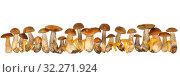 Boletus edulis isolated on white background. Close up. Mushroom. Стоковое фото, фотограф Наталья Аксёнова / Фотобанк Лори