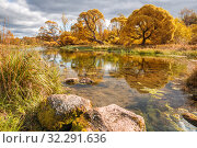 Scenic autumn landscape. Yellow willows are reflected in clear water of small shallow river. Izvarka River in the Leningrad Region, Russia. Стоковое фото, фотограф Юлия Бабкина / Фотобанк Лори