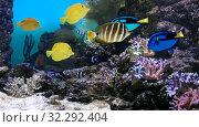 Тропические рыбки на фоне кораллового рифа. Стоковое фото, фотограф Татьяна Белова / Фотобанк Лори