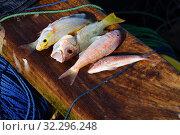Купить «Freshly caught fish. Zanzibar, Tanzania, Africa», фото № 32296248, снято 6 октября 2019 г. (c) Знаменский Олег / Фотобанк Лори