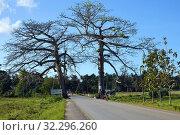 Купить «African road, Zanzibar, Tanzania, Africa», фото № 32296260, снято 6 октября 2019 г. (c) Знаменский Олег / Фотобанк Лори