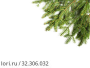 Branch of spruce on a white background, located in the corner. Стоковое фото, фотограф Юлия Бабкина / Фотобанк Лори
