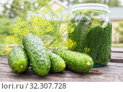 Купить «Fresh-salted cucumbers», фото № 32307728, снято 1 августа 2019 г. (c) Юлия Бабкина / Фотобанк Лори