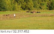 Купить «flock of sheep in a pasture in sunset light», видеоролик № 32317452, снято 20 октября 2019 г. (c) Володина Ольга / Фотобанк Лори