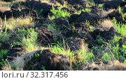 Купить «Fragment of plowed land with weed», видеоролик № 32317456, снято 24 августа 2019 г. (c) Володина Ольга / Фотобанк Лори