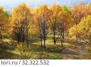 Купить «Золотая осень в парке», фото № 32322532, снято 14 октября 2018 г. (c) Елена Коромыслова / Фотобанк Лори