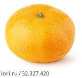 Whole tangerine or orange citrus fruit isolated on white. Стоковое фото, фотограф Роман Самохин / Фотобанк Лори