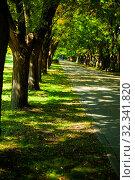 Купить «Alley in the park on a sunny day.», фото № 32341820, снято 3 октября 2019 г. (c) Елена Блохина / Фотобанк Лори