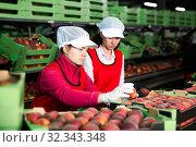 Купить «Two fine women working on producing sorting line», фото № 32343348, снято 21 февраля 2020 г. (c) Яков Филимонов / Фотобанк Лори