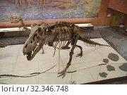 Скелет тарбозавра в Палеонтологическом музее им. Ю.А.Орлова, Москва (2019 год). Редакционное фото, фотограф Носов Руслан / Фотобанк Лори