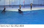 Купить «Presentation (Show) VDNKh Moskvarium - the biggest in Europe sea aquarium and entertainment center, Moscow, Russia», видеоролик № 32352464, снято 31 октября 2019 г. (c) Владимир Журавлев / Фотобанк Лори