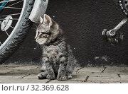 Купить «Маленький серый котенок около велосипеда», фото № 32369628, снято 5 сентября 2019 г. (c) E. O. / Фотобанк Лори