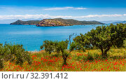 Spring in Crete - poppies, olives against the background of the sea and the fortress of Spinalonga (2019 год). Стоковое фото, фотограф photoff / Фотобанк Лори