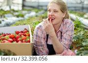 Купить «Woman tasting strawberry in greenhouse», фото № 32399056, снято 9 апреля 2019 г. (c) Яков Филимонов / Фотобанк Лори