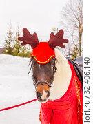 Купить «Portrait of a festively decorated horse.», фото № 32406140, снято 10 марта 2019 г. (c) Акиньшин Владимир / Фотобанк Лори