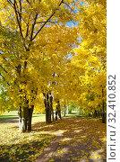 Купить «Осень в городском парке», фото № 32410852, снято 12 октября 2018 г. (c) Елена Коромыслова / Фотобанк Лори