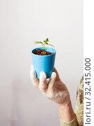 Купить «A female gardener shows a pot with sprouts after a pick.», фото № 32415000, снято 3 апреля 2016 г. (c) Акиньшин Владимир / Фотобанк Лори
