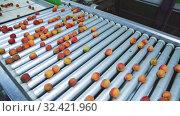 Купить «Fresh ripe apricots running on rolling conveyor of sorting production line», видеоролик № 32421960, снято 29 июня 2019 г. (c) Яков Филимонов / Фотобанк Лори