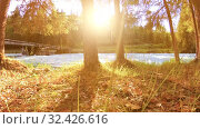 Купить «Meadow at mountain river bank. Landscape with green grass, pine trees and sun rays. Movement on motorised slider dolly.», видеоролик № 32426616, снято 20 февраля 2019 г. (c) Александр Маркин / Фотобанк Лори