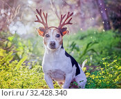 Купить «Portrait of dog Jack Russell sitting with golden deer horns», фото № 32428340, снято 24 декабря 2017 г. (c) Kira_Yan / Фотобанк Лори