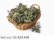 Купить «Исландский мох в корзинке (Cetraria islandica) на белом фоне», фото № 32429848, снято 18 ноября 2019 г. (c) Александр Романов / Фотобанк Лори