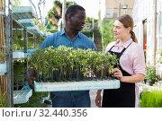Купить «Workers arranging seedlings», фото № 32440356, снято 19 апреля 2018 г. (c) Яков Филимонов / Фотобанк Лори