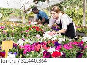 Female worker checking flowers in glasshouse. Стоковое фото, фотограф Яков Филимонов / Фотобанк Лори