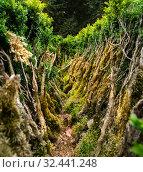 Купить «Dense green plants closeup view», фото № 32441248, снято 14 июля 2019 г. (c) Tryapitsyn Sergiy / Фотобанк Лори