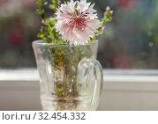 Купить «Close-up shot of the beautiful flowers. Suitable for floral background.», фото № 32454332, снято 21 января 2020 г. (c) easy Fotostock / Фотобанк Лори