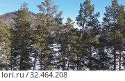 Купить «Aerial video view from lifting up drone over the winter forest and river Katun covered by ice», видеоролик № 32464208, снято 30 октября 2019 г. (c) Serg Zastavkin / Фотобанк Лори