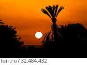 Sonnenuntergang am Abend vor einer Palme in Ägypten. Стоковое фото, фотограф Zoonar.com/Erwin Wodicka / age Fotostock / Фотобанк Лори