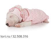 Купить «Nice Miniature Bull Terrier puppy sleeping», фото № 32508316, снято 13 ноября 2019 г. (c) Алексей Кузнецов / Фотобанк Лори