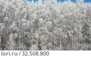 Купить «Aerial video view from moving up drone of birch forest under hoarfrost in winter season.», видеоролик № 32508800, снято 7 ноября 2019 г. (c) Serg Zastavkin / Фотобанк Лори