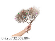 Купить «Woman's hand holds dry branch of natural bush is decorated with small colored Christmas ball», фото № 32508804, снято 27 ноября 2019 г. (c) Kira_Yan / Фотобанк Лори