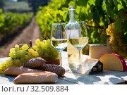 Купить «White wine, cheese, bread and grapes in vineyard», фото № 32509884, снято 21 февраля 2020 г. (c) Яков Филимонов / Фотобанк Лори