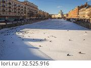 Купить «Утки, зимующие в городе, на льду замерзшего канала Грибоедова, Санкт-Петербург», фото № 32525916, снято 21 февраля 2019 г. (c) Юлия Бабкина / Фотобанк Лори