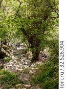 Small mountain river in the forest on a sunny day (Greece, Andros Island, Cyclades) (2019 год). Стоковое фото, фотограф Татьяна Ляпи / Фотобанк Лори