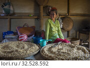 Купить «Soybeans for tempeh production in a house in the village of Candirejo in the countryside of central Java Island in Indonesia.», фото № 32528592, снято 16 мая 2019 г. (c) age Fotostock / Фотобанк Лори