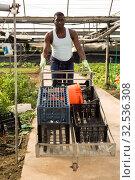 Купить «Afro-american male farmer carrying boxes on cart in greenhouse», фото № 32536308, снято 29 октября 2019 г. (c) Яков Филимонов / Фотобанк Лори
