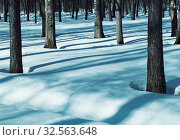 Купить «Зимний лес. Зимний пейзаж. Winter forest landscape with snowy winter trees and white snowdrifts on the foreground. Colorful winter forest», фото № 32563648, снято 6 марта 2019 г. (c) Зезелина Марина / Фотобанк Лори