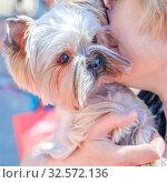 Купить «Russia, Samara, May 2017: A Yorkshire Terrier dog in the hands of a beautiful lady.», фото № 32572136, снято 27 мая 2017 г. (c) Акиньшин Владимир / Фотобанк Лори